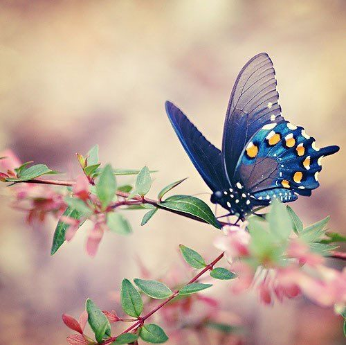 farfalla su ramo in fiore