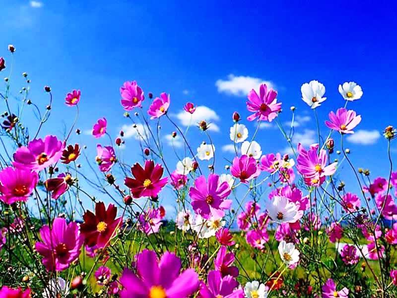 fiori-bianchi-e-viola.png