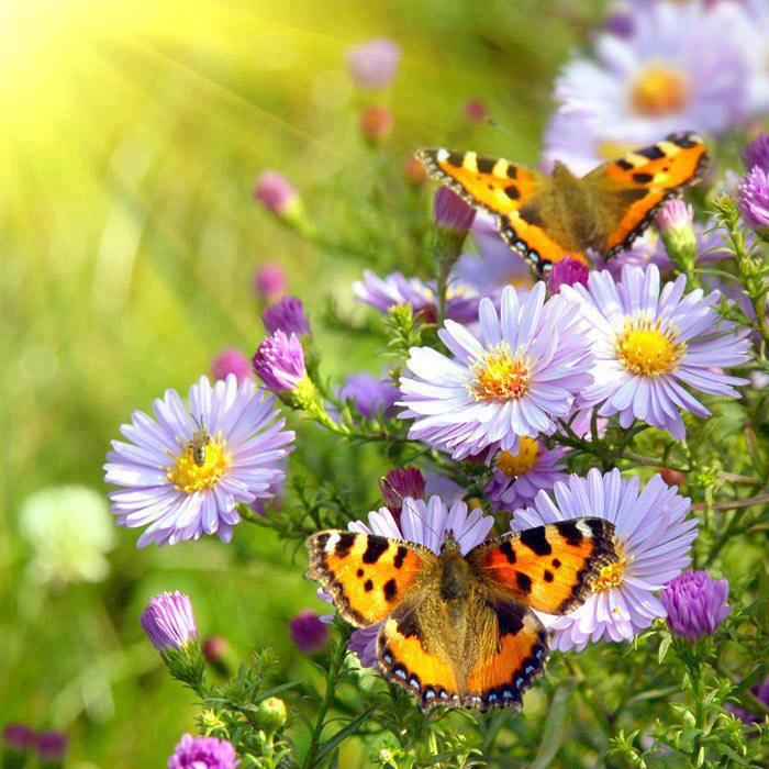 farfalle e margherite