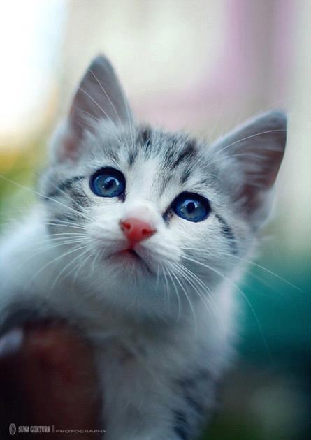 gattino molto bello