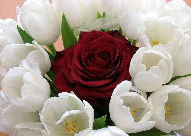 rossa bianchi