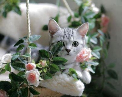 altro gatto fiorito