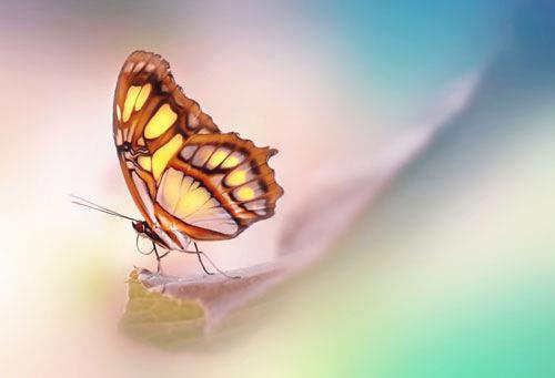 bella farfalla da dkt