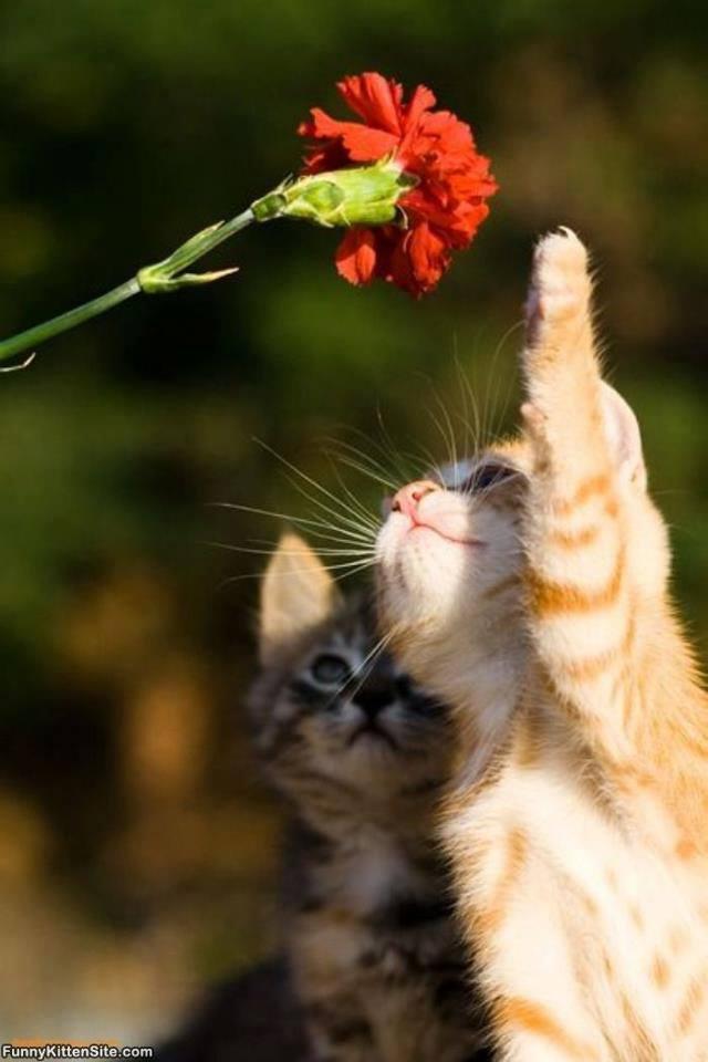 gattini con garofano
