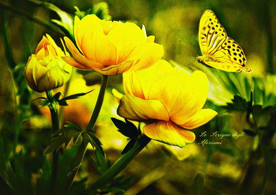 anemoni gialli con farfalla
