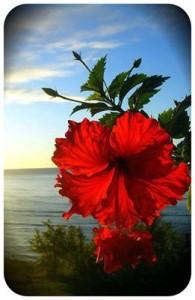 mare fiore