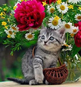 fiorito