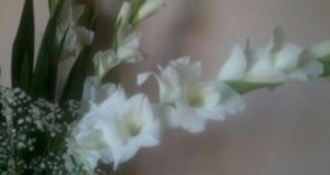 cropped-gladiolomod12.jpg