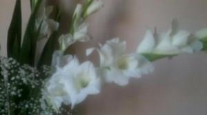 cropped-gladiolomod14.jpg