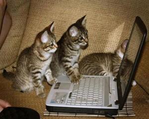 gatti informatici