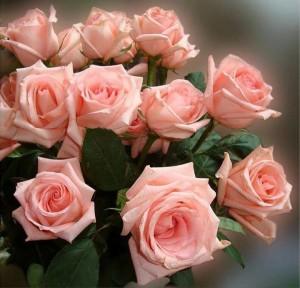 tante rose rosa